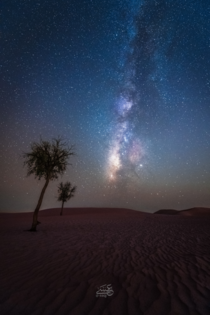 A Night in the Arabian Desert
