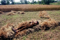 A Pakistani farmer takes a nap on harvested wheat in a field in the suburbs of northwest Pakistans Peshawar