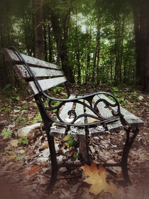 A park bench randomly left in the middle of the woods