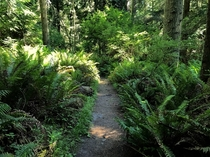 A path through the forest - Deception Pass State Park WA