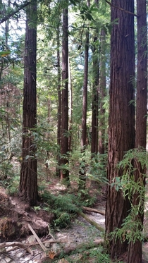 A peaceful place among the California Redwoods