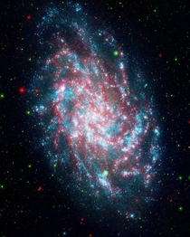A photo of the Triangulum Galaxy This photo is a blend of two images captured by the Galaxy Evolution Explorer and the Spitzer Space Telescope