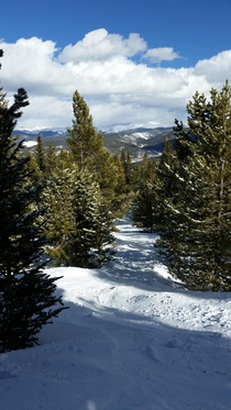 A picture of a ski path through the trees I took on my trip to Colorado Taken at Breckenridge