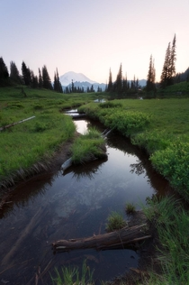 A pleasant summer day in Mt Rainier National Park Washington