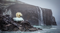 A polar bear by a waterfall by Cory Richards