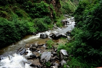 A rain water stream near Jalori Pass Himachal Pradesh India