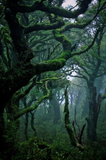 A rainforest in Waikaremoana New Zealand