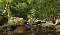A rainforest stream in northern Australia