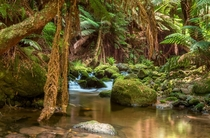 A rainforest stream in Northern Tasmania