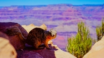 A random squirrel got in my way while I was taking pictures of Grand Canyon National park  x