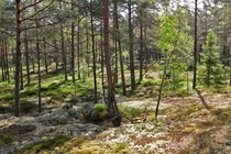 A relaxing forest Stockholm Sweden