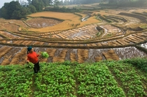 A rice farmer works in terraced paddies in Yunnan Province China