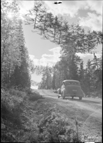 A road in Finland camoflaged during the Continuation War June