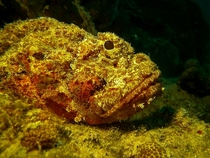 A Rockfish named Peg who isnt impressed Bonaire NA