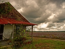 A Sad Old Sharecroppers House Under Brooding Skies Surrounded by Cotton fields in Greenville NC Photo by Watson Brown