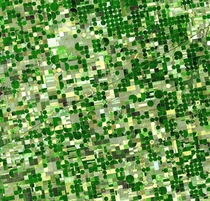 A satellite image of circular fields characteristic of center pivot irrigation Kansas