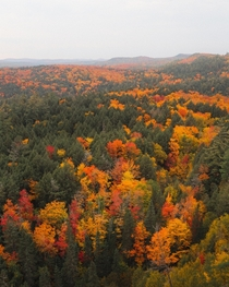 A sea of leaves Algonquin Park Canada  Social mikemarkov