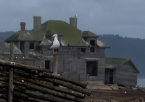 A seagull stands guard over the abandoned Lighthouse Keepers House Ao Nuevo Island California