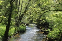 A secluded forest river - Dartmoor England
