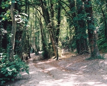 A section of woodland between Offham and Lewes East Sussex England