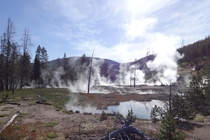 A Semi-Post-Apocalyptic World in Yellowstone