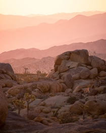 A serene colorful sunrise over magnificent rocks and boulders in Joshua Tree National Park  liamsearphoto