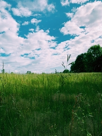 A simple field in South Carolina Took the picture while hiking Such a peaceful feeling