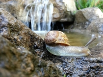 A snail and a waterfall