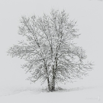 A solitary tree covered in snow Navarra Spain OC