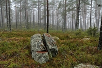 A split rock in a Swedish forest