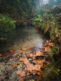 A spring fed stream in the Texas Hill Country