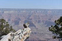 A squirrels breakfast over the Grand Canyon