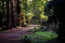 A stroll through Muir Woods