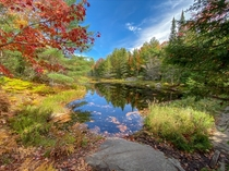 A sunny autumn afternoon in Algonquin Provincial Park  x