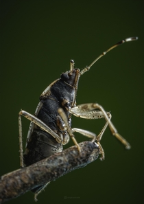 A tiny seed bug enduring the damages it took