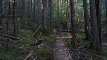 A trail through the forest of Vancouver Island