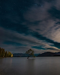 A tree and shooting stars Wanaka New Zealand