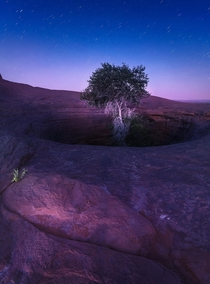 A tree growing out of a deep well on a massive slab of sandstone in Utah
