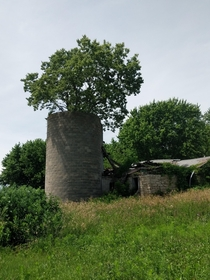 A tree growing out of a silo