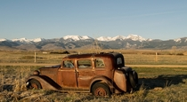 A tree growing out of an abandoned car with the Tobacco Root Mountains in the background