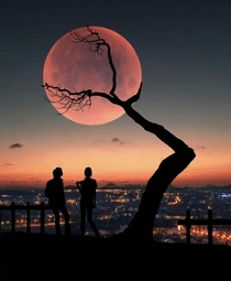 A tree holding up the moon