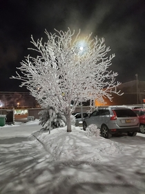 A tree in a parking lot Anchorage AK