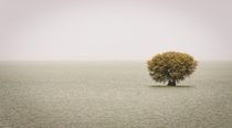 A tree in the middle of Lake Mangla Azad Kashmir Pakistan  by Masud Ahmed Khan
