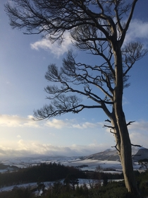 A Tree In Winter Aberdeenshire Scotland
