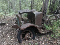 A tree took over the drivers seat of this abandoned truck  Mendocino county CA