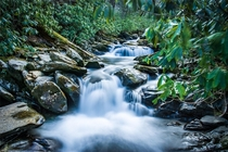 A tributary stream of the pigeon river in Great Smoky Mountains National Park