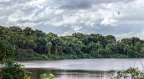 A tumultuous day in the jungles ofjust kidding this is a small lake in the middle of Orlando FL