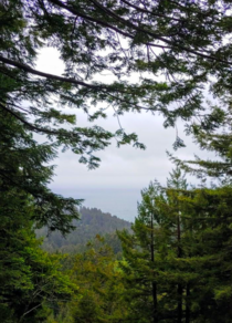A verdant view from the canopy of the Redwood Forest looking out into the Pacific Ocean