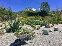 A very nice succulent garden by the roadside in Southern California