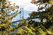 A view of Lions Gate Bridge in Vancouver through the trees